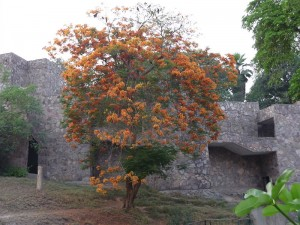 lahore zoo - AlifYAY - a coral tree